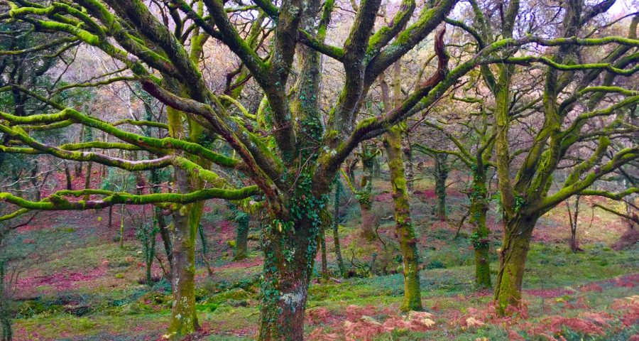 Galicia Y Sus Bosques Encantados