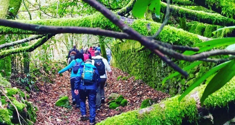 Ruta Foxo Do Lobo Cotobade Guíate Galicia